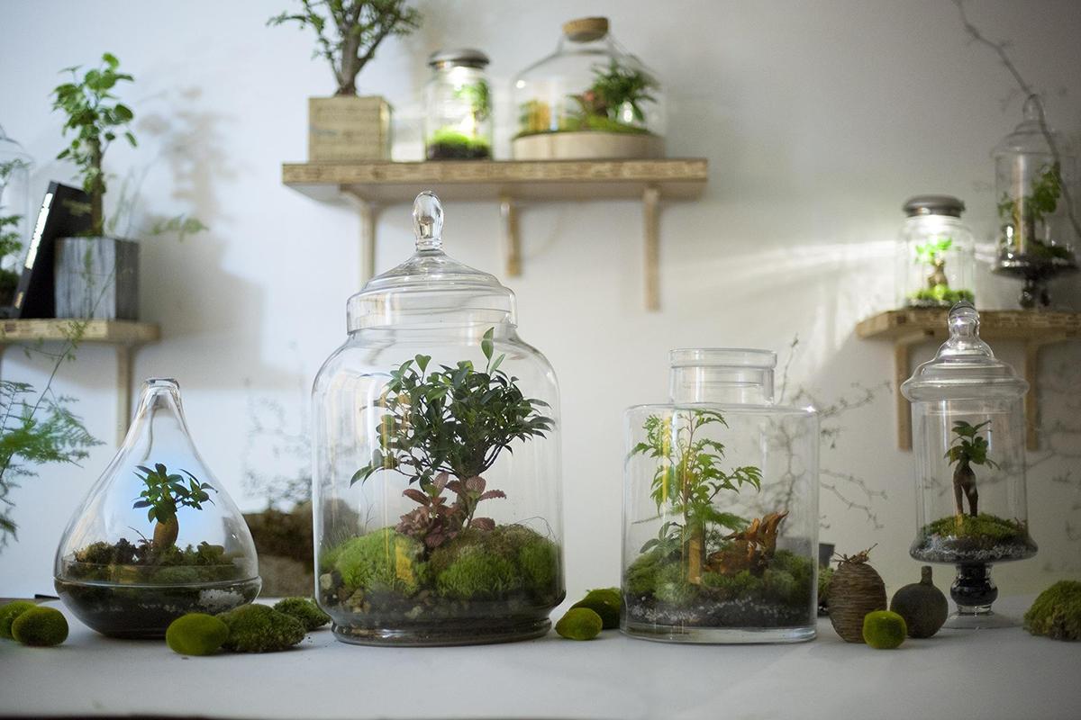 Green-Factory-votre-jardin-dans-un-bocal